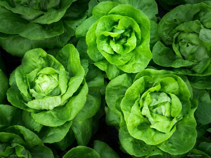 BRYERLY Lettuce Photo by Damien Kuhn